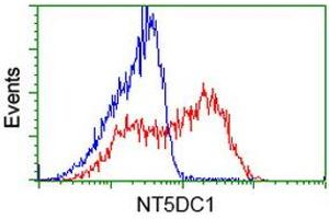 Image no. 17 for anti-5'-Nucleotidase Domain Containing 1 (NT5DC1) antibody (ABIN1499838)