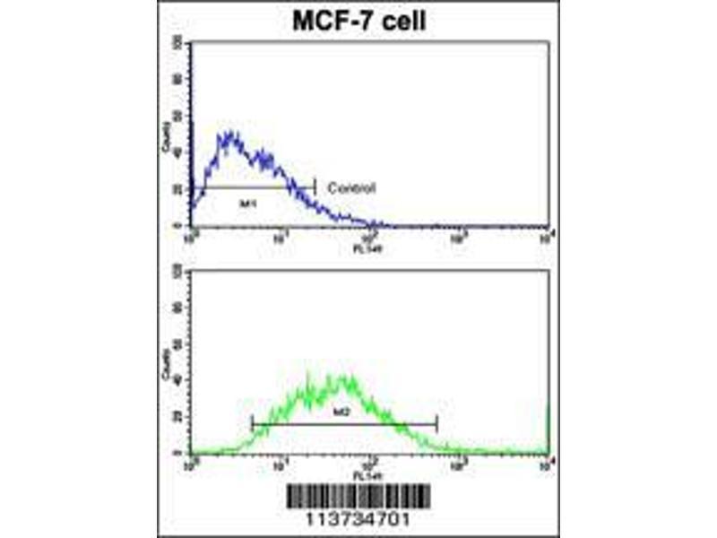 Immunohistochemistry (IHC) image for anti-Cadherin 9 antibody (CDH9) (AA 701-729) (ABIN388203)