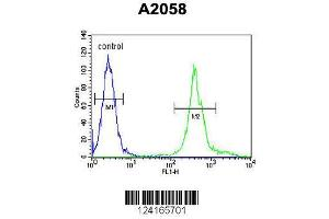 Image no. 1 for anti-Mitochondrial Ribosomal Protein S24 (MRPS24) (AA 21-50), (Center) antibody (ABIN654454)