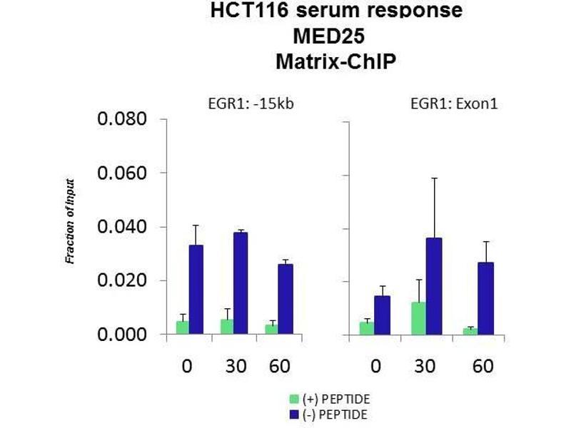 Chromatin Immunoprecipitation (ChIP) image for anti-Mediator Complex Subunit 25 (MED25) (N-Term) antibody (ABIN2784291)