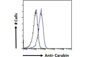 Image no. 2 for anti-TBC1 Domain Family, Member 10C (TBC1D10C) (Internal Region) antibody (ABIN190840)