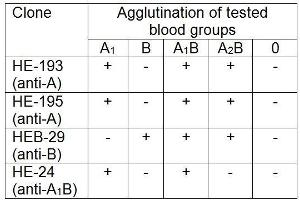 Image no. 1 for anti-ABO, Blood Group A Antigen antibody (ABIN93919)