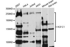 Western Blotting (WB) image for anti-Host Cell Factor C1 (VP16-Accessory Protein) (HCFC1) antibody (ABIN1872947)