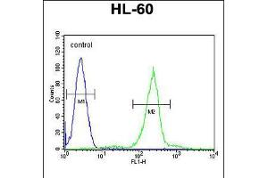Image no. 2 for anti-Complement Component 1, Q Subcomponent, C Chain (C1QC) (AA 93-120) antibody (ABIN5535736)
