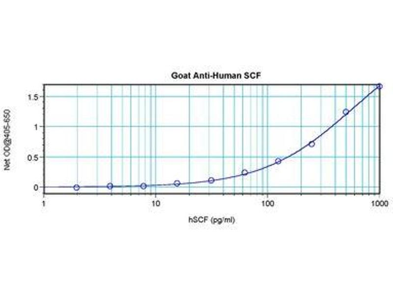 image for anti-KIT Ligand antibody (KITLG) (ABIN1500815)