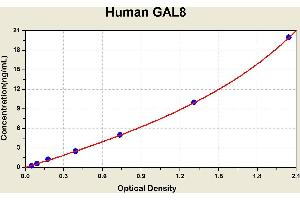 Image no. 1 for Lectin, Galactoside-Binding, Soluble, 8 (LGALS8) ELISA Kit (ABIN1115032)