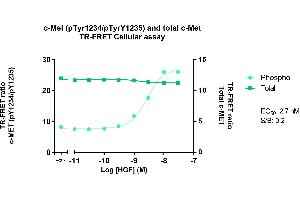 Image no. 1 for Phospho-Met (Y1234/1235) TR-FRET Cellular Assay Kit (ABIN6939010)