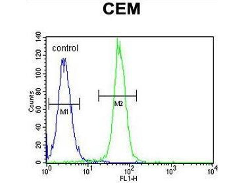 Flow Cytometry (FACS) image for anti-ADP-Ribosylation Factor-Like 5B (ARL5B) (AA 129-161), (C-Term) antibody (ABIN950503)