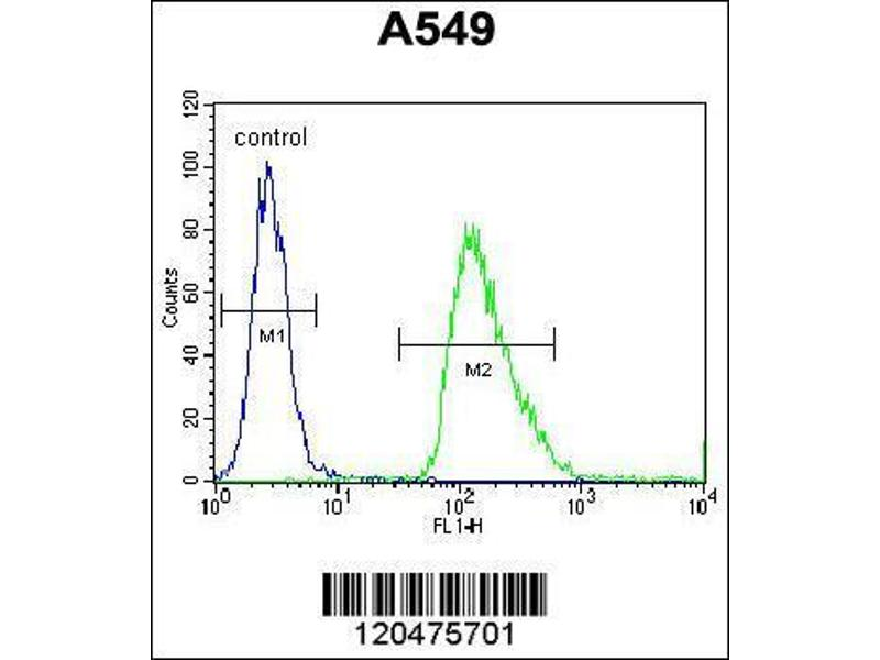 Flow Cytometry (FACS) image for anti-Immediate Early Response 3 (IER3) (AA 38-65), (N-Term) antibody (ABIN655735)