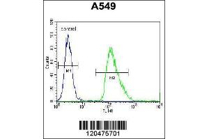 Image no. 5 for anti-Immediate Early Response 3 (IER3) (AA 38-65), (N-Term) antibody (ABIN655735)