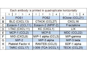 image for Mouse Chemokine Array Q1 (ABIN625762)