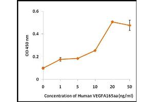 Image no. 1 for Vascular Endothelial Growth Factor (VEGF) (Active) protein (ABIN5509395)