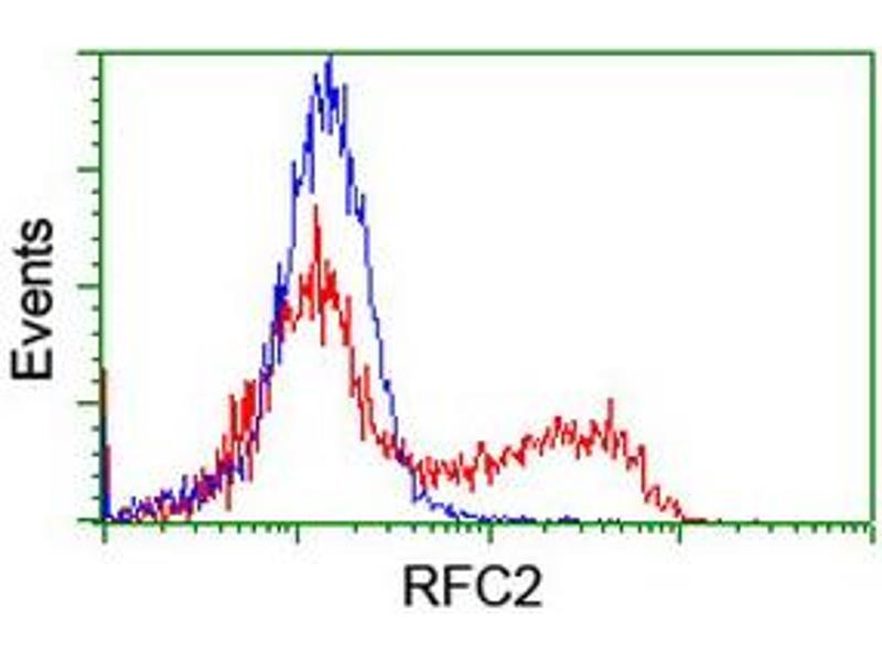 image for anti-Replication Factor C (Activator 1) 2, 40kDa (RFC2) (AA 1-234) antibody (ABIN1490617)