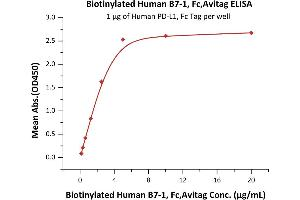 Image no. 1 for CD80 (CD80) (AA 35-242) (Active) protein (Fc Tag,AVI tag,Biotin) (ABIN4949000)