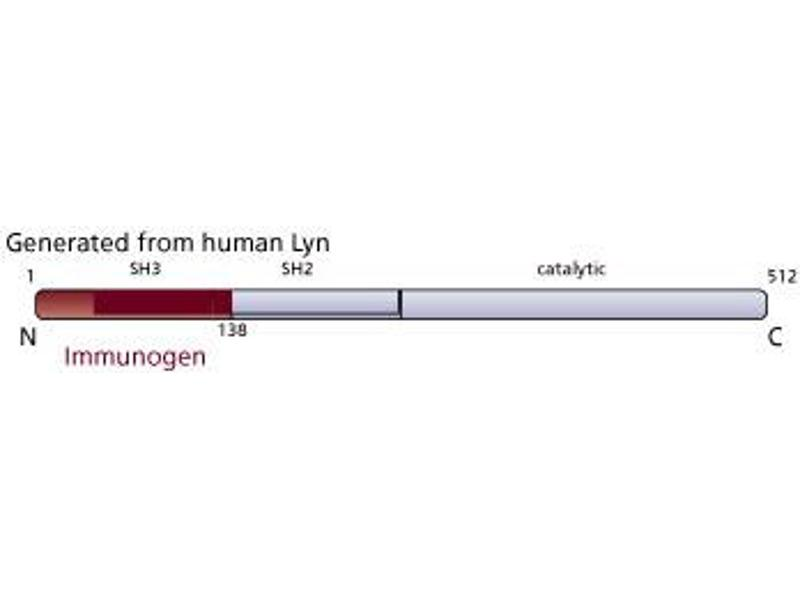 image for anti-LYN antibody (V-Yes-1 Yamaguchi Sarcoma Viral Related Oncogene Homolog) (AA 1-138) (ABIN967689)