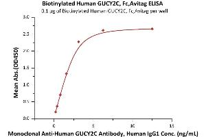 Image no. 1 for Guanylate Cyclase 2C (Heat Stable Enterotoxin Receptor) (GUCY2C) (AA 24-430) (Active) protein (Fc Tag,AVI tag,Biotin) (ABIN6973083)
