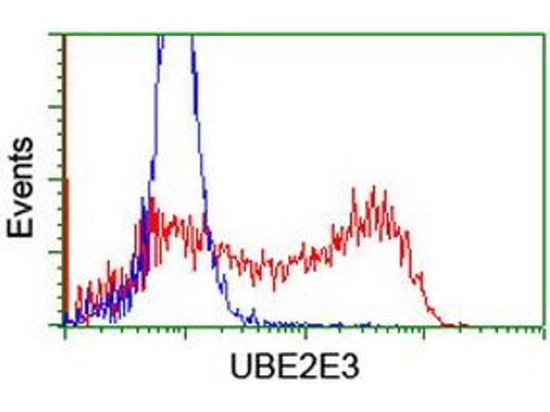 Flow Cytometry (FACS) image for anti-Ubiquitin-Conjugating Enzyme E2E 3 (UBE2E3) antibody (ABIN2455771)