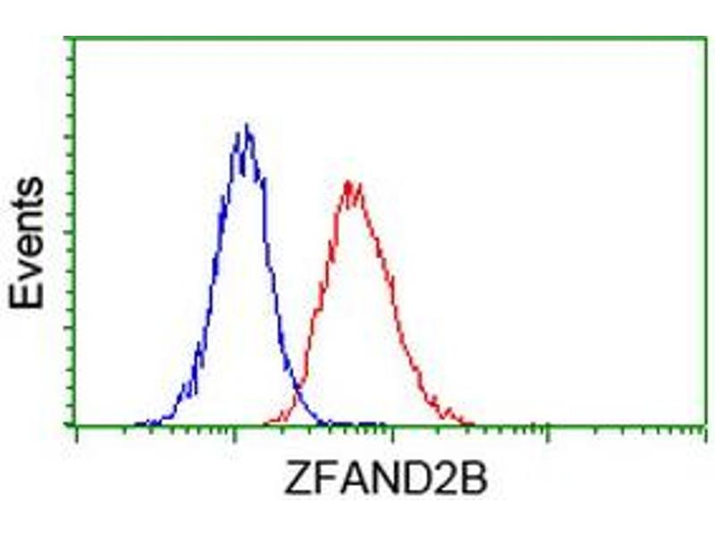 Image no. 4 for anti-Zinc Finger, AN1-Type Domain 2B (ZFAND2B) antibody (ABIN1501805)