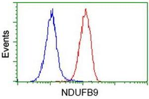 Image no. 2 for anti-NADH Dehydrogenase (Ubiquinone) 1 beta Subcomplex, 9, 22kDa (NDUFB9) (AA 3-179) antibody (ABIN2727033)