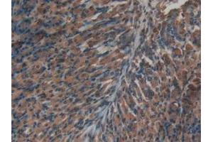 Immunohistochemistry (Paraffin-embedded Sections) (IHC (p)) image for anti-Insulin (INS) (AA 25-54), (AA 90-110) antibody (ABIN2934870)