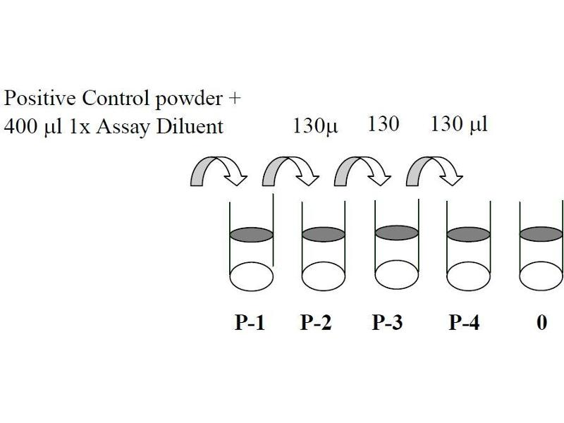 image for Met Proto-Oncogene (MET) ELISA Kit (ABIN1981761)