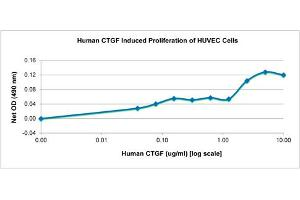 Image no. 1 for Connective Tissue Growth Factor (CTGF) protein (ABIN6699725)