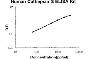 Image no. 1 for Cathepsin S (CTSS) ELISA Kit (ABIN6720216)