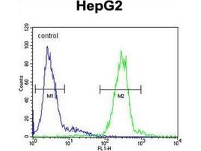image for anti-Cathepsin H (CTSH) (AA 32-62), (N-Term) antibody (ABIN452890)