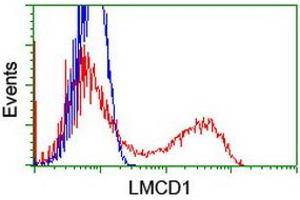 Image no. 1 for anti-LIM and Cysteine-Rich Domains 1 (LMCD1) antibody (ABIN2724853)