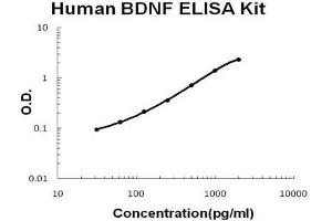 Image no. 1 for Brain-Derived Neurotrophic Factor (BDNF) ELISA Kit (ABIN411257)