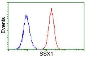 Image no. 1 for anti-Synovial Sarcoma, X Breakpoint 1 (SSX1) antibody (ABIN1501156)