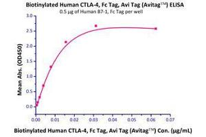 Image no. 2 for Cytotoxic T-Lymphocyte-Associated Protein 4 (CTLA4) (AA 37-162) (Active) protein (Fc Tag,AVI tag,Biotin) (ABIN2870534)