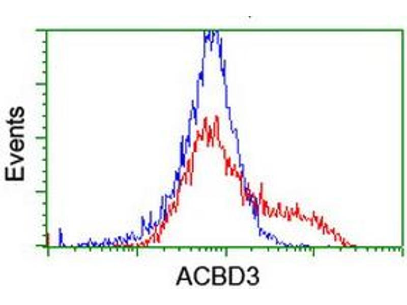 Image no. 1 for anti-Acyl-CoA Binding Domain Containing 3 (Acbd3) antibody (ABIN2715642)