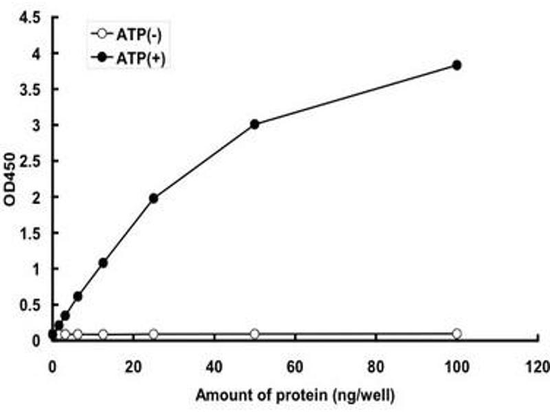 image for Mitogen-Activated Protein Kinase Kinase Kinase MLK4 (KIAA1804) (AA 114-420), (partial) protein (GST tag) (ABIN5569775)