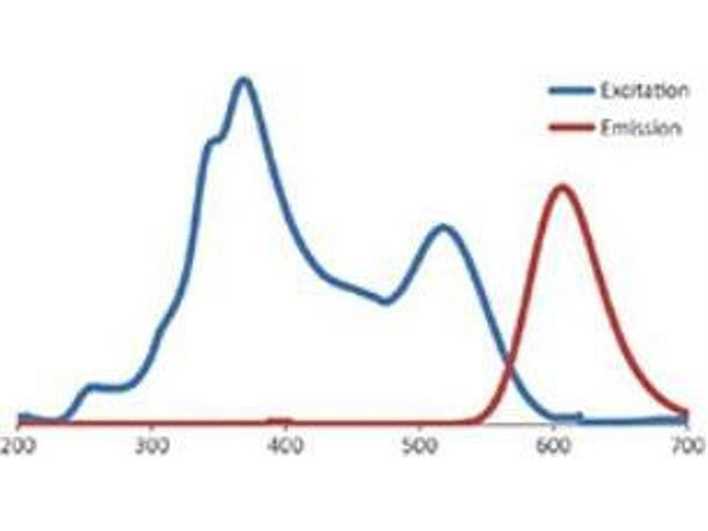 Staining Methods (StM) image for FluoroStain™ Protein Fluorescent Staining Dye (Red, 1,000X) (ABIN5662586)