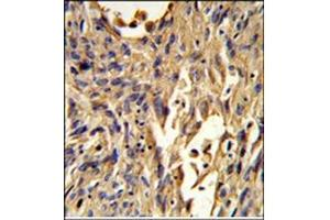 Image no. 3 for anti-S100 Calcium Binding Protein A10 (S100A10) (AA 19-48), (Middle Region) antibody (ABIN954651)