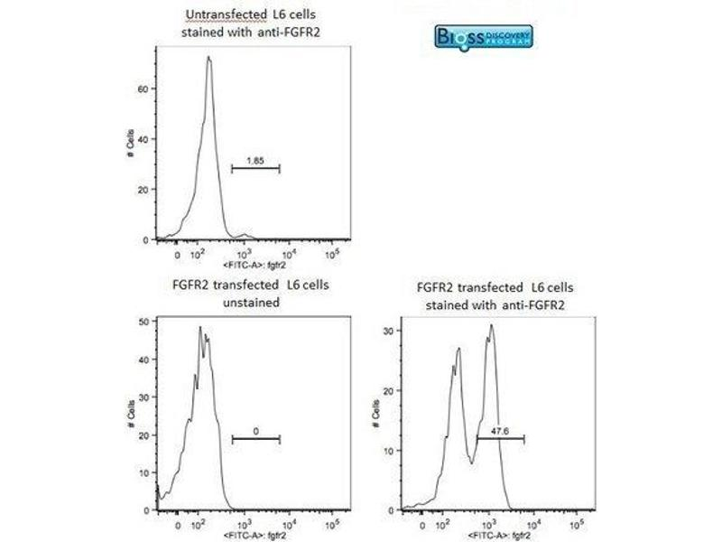 Flow Cytometry (FACS) image for anti-Fibroblast Growth Factor Receptor 2 (FGFR2) antibody (ABIN671751)