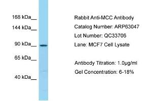 Image no. 1 for anti-Mutated in Colorectal Cancers (MCC) (C-Term) antibody (ABIN2789347)