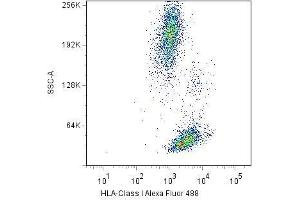 Flow Cytometry (FACS) image for anti-MHC Class I Polypeptide-Related Sequence A (MICA) antibody (ABIN1774789)