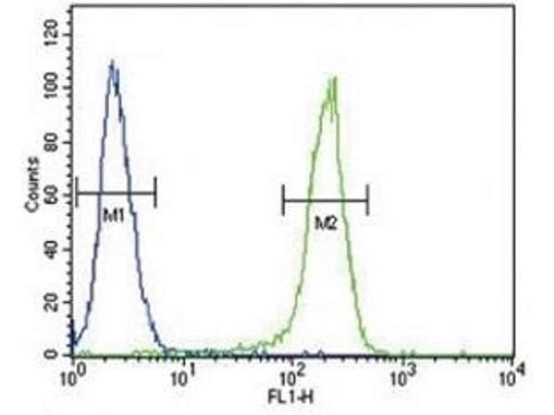 Flow Cytometry (FACS) image for anti-Chemokine (C-C Motif) Receptor 7 (CCR7) (AA 11-37) antibody (ABIN3030497)