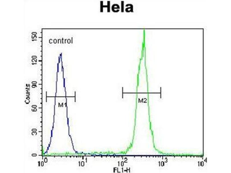 Flow Cytometry (FACS) image for anti-Betacellulin antibody (BTC) (AA 24-54) (ABIN950656)
