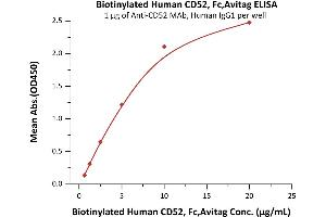 Image no. 1 for CD52 (CD52) (AA 25-36) (Active) protein (Fc Tag,AVI tag,Biotin) (ABIN5526651)