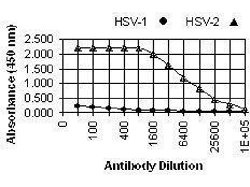 ELISA image for anti-HSV-2 ICP8 Major DNA Binding Protein (HSV-2 ICP8) antibody (ABIN265565)