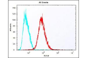 Flow Cytometry (FACS) image for anti-Iduronidase, alpha-L- (IDUA) (AA 236-264), (Center) antibody (ABIN651536)