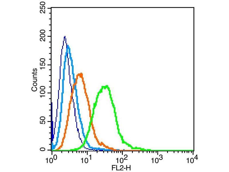 image for anti-Insulin Receptor (INSR) antibody (ABIN671841)