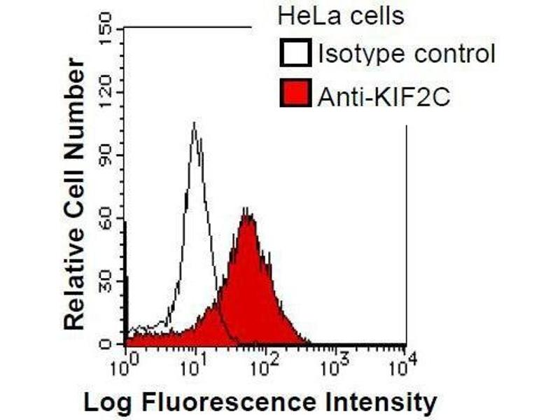 Flow Cytometry (FACS) image for anti-Kinesin Family Member 2C (KIF2C) antibody (ABIN931054)