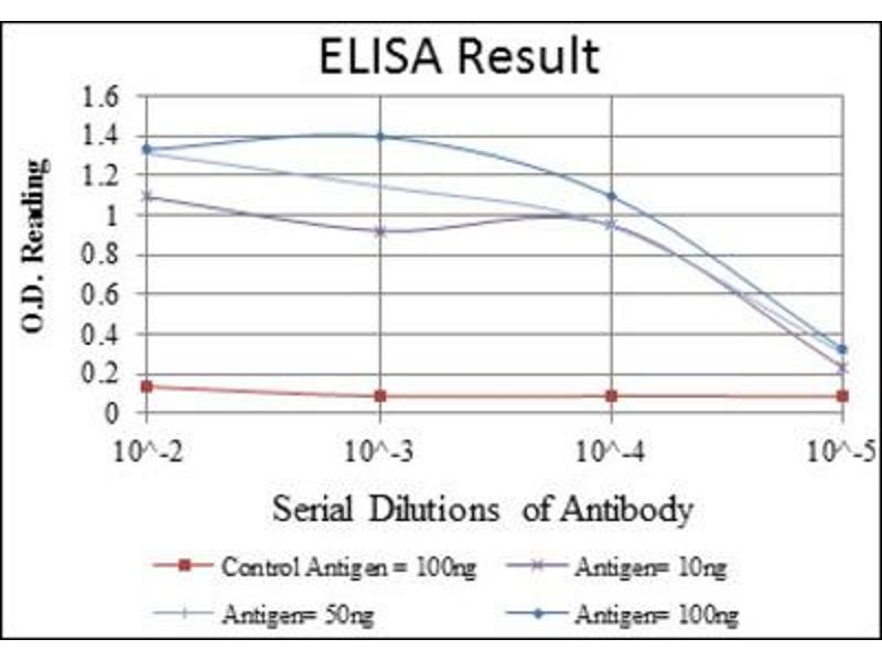 ELISA image for anti-Eukaryotic Translation Elongation Factor 2 (EEF2) antibody (ABIN1846025)
