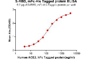 Image no. 3 for SARS-CoV-2 Spike (RBD) protein (mFc Tag,His tag) (ABIN6961147)