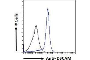 Image no. 4 for anti-Down Syndrome Cell Adhesion Molecule (DSCAM) (Internal Region) antibody (ABIN185687)