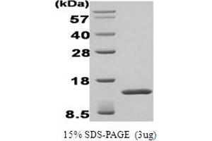 Image no. 1 for Transforming Growth Factor, beta-Induced, 68kDa (TGFBI) protein (ABIN667042)